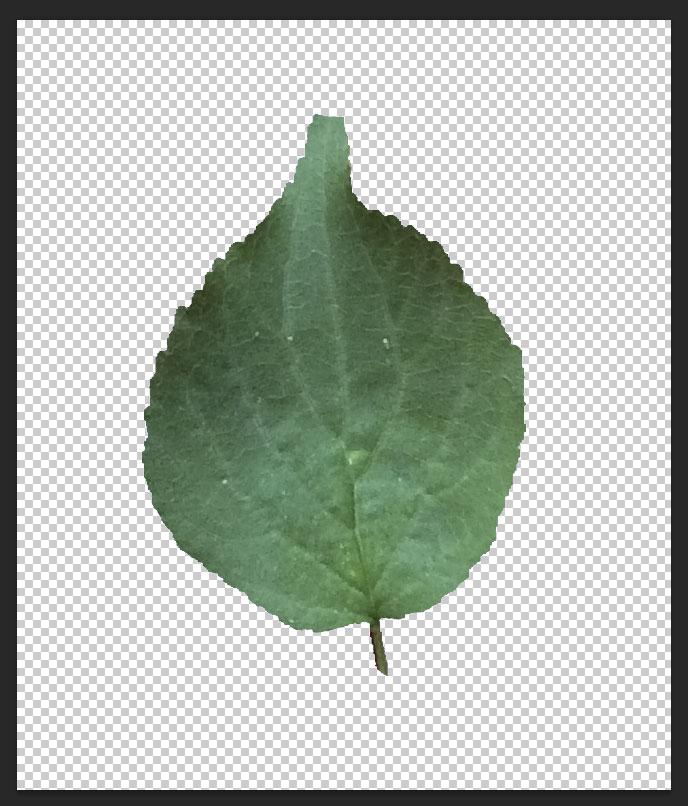leaf-texture12