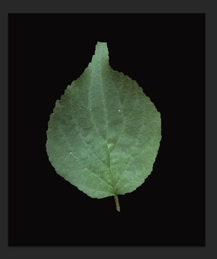 leaf-texture6