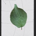 【Photoshop】ワープやパペットワープで画像を変形させよう。
